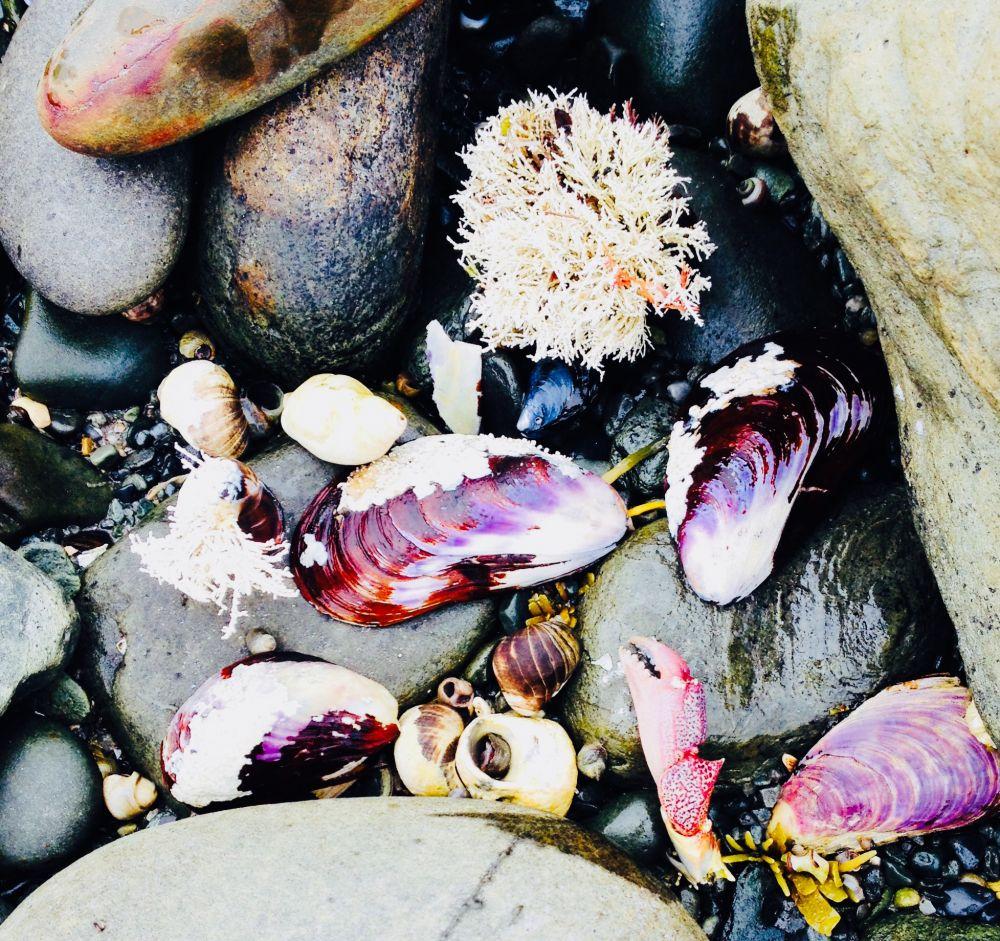 """""""Beach Treasures"""", by Danielle Henri. Taken at Cherry Hill Beach."""