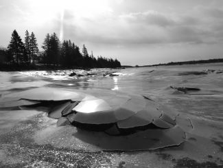 TIDAL ICE by