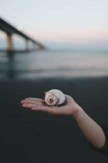 Finding shells by