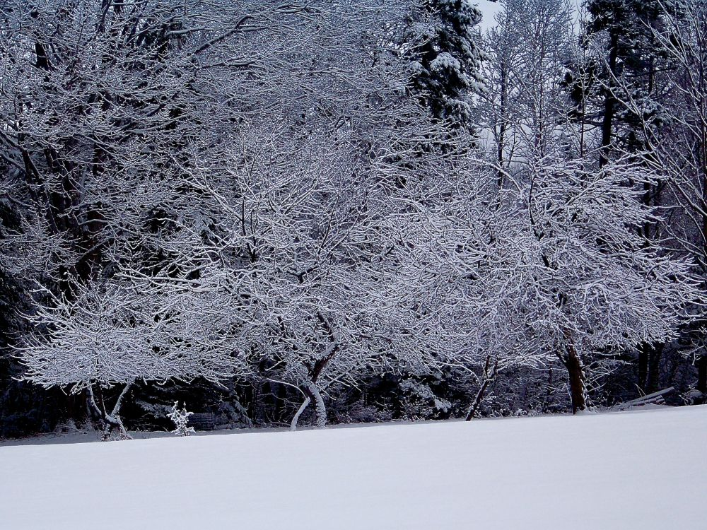 """Winter Lace"", by Michael Hagenbuch. Taken at Little Harbour, Nova Scotia."