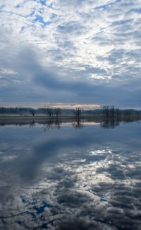 Reflections by