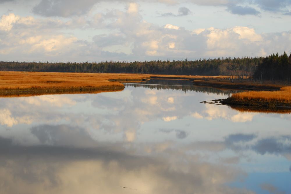 """""""CALM"""", by G. NEARING. Taken at yarmouth co . ns."""