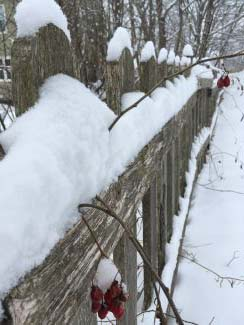 White Picket Fence by