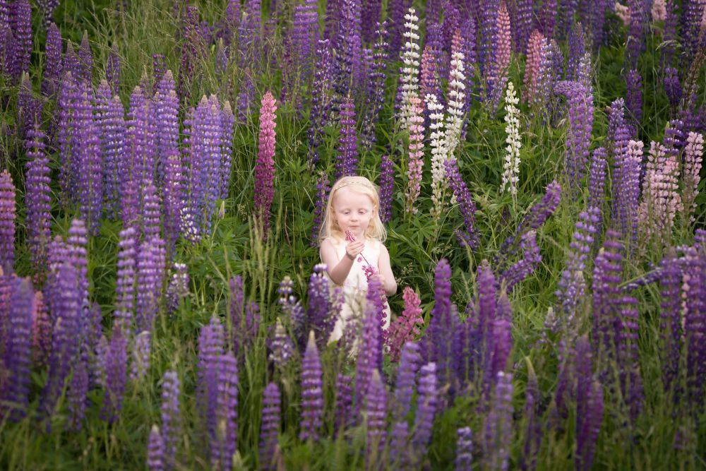 """""""Lupin  Girl"""", by Janice Mullen."""
