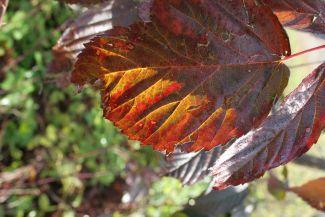 Autumn colour by