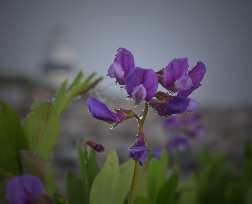 """""""Morning Dew"""", by Darlene Rafuse. Taken at Margaretsville, NS."""