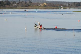 Setting Nets by