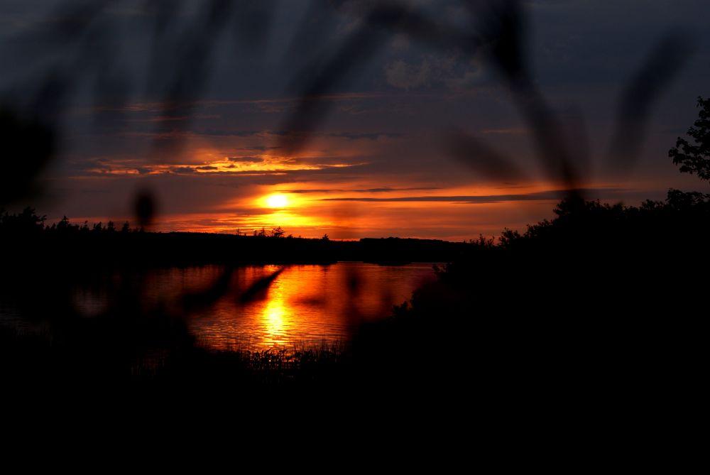 """Sunset through the bushes"", by Margaret Keizer. Taken at Eastern Passage."