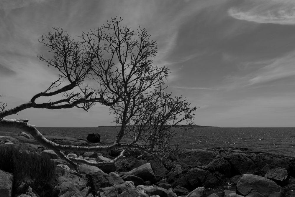 """""""Shelburne Harbour"""", by G. NEARING. Taken at SHELBURNE.CO."""