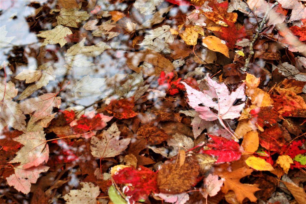 """Autumn carpet"", by Graham Lavers. Taken at Bedford NS."