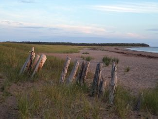 Old Fence Line at Beach by