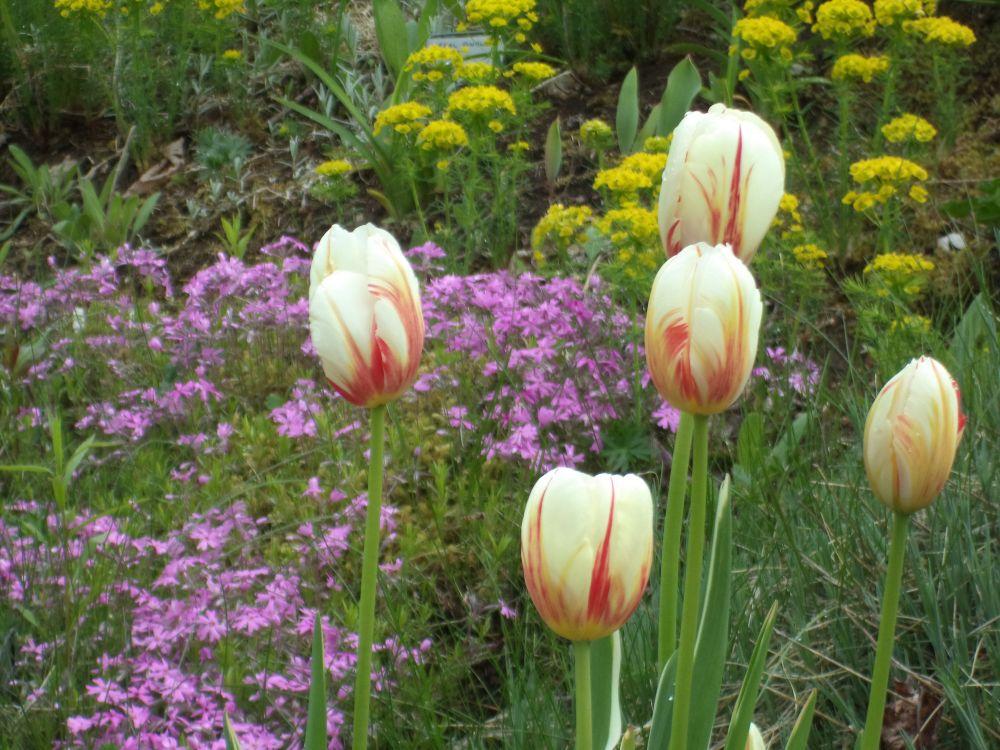 """Spring Beauty"", by Anita Daye. Taken at Upper Lakeville, NS."