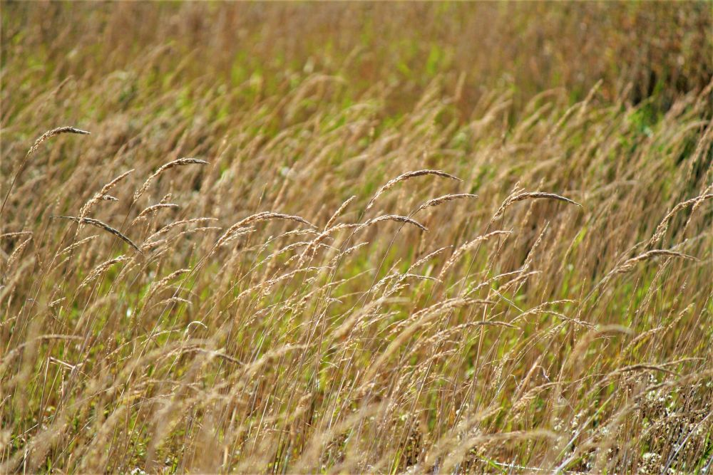 """Marsh Grass"", by Graham Lavers. Taken at Onslow NS."