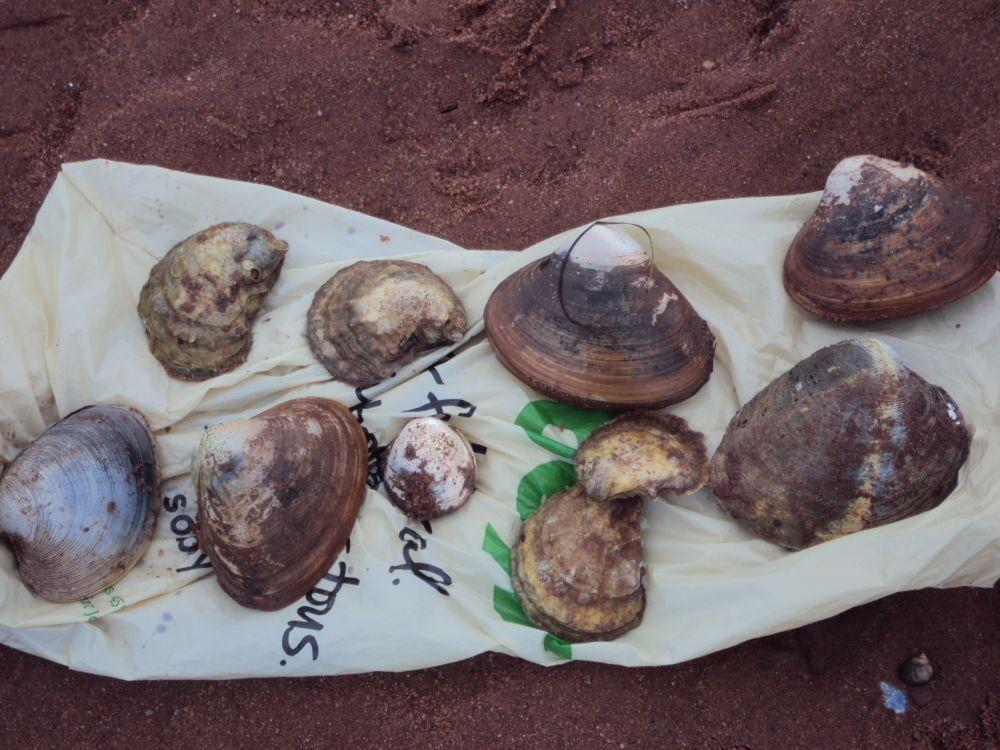 """Edible Shellfish"", by Cheryl MacDonald. Taken at PEI."