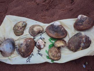 Edible Shellfish by