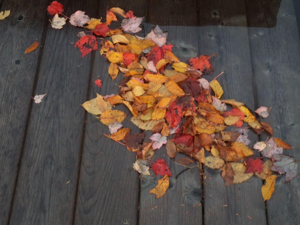 """""""Washed Up"""", by Anita Daye. Taken at Lake Charlotte, NS."""