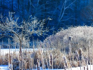 Icy blue morning by