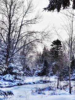 Winter Wonderland by