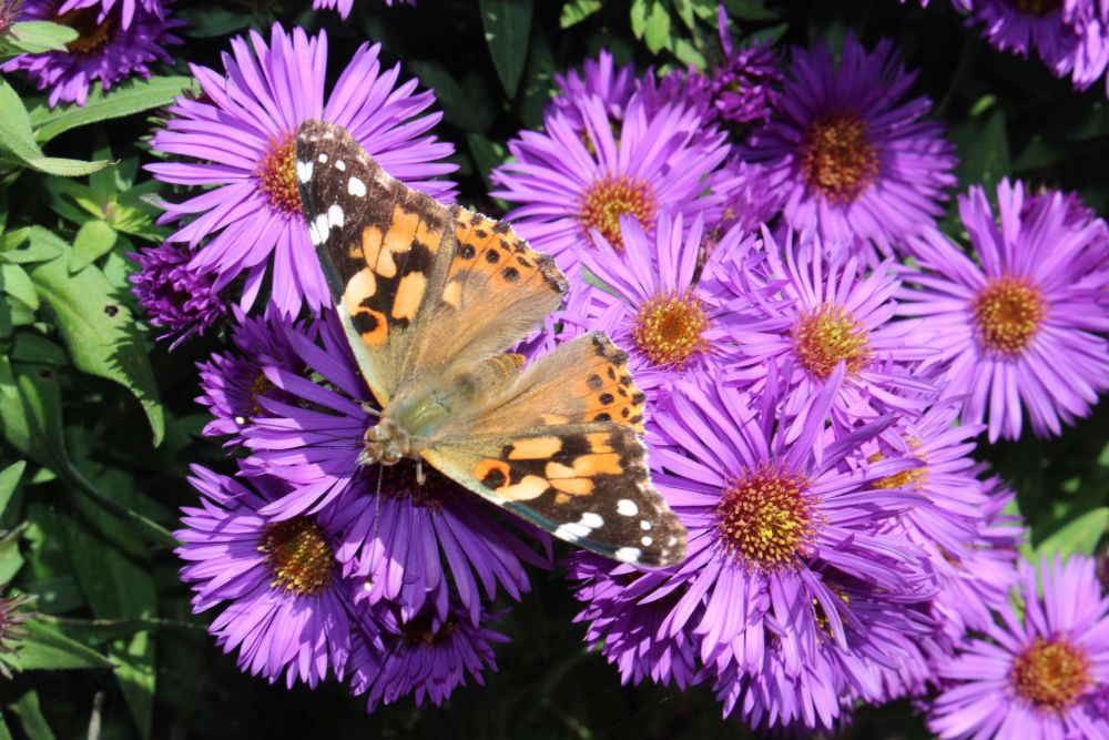 """""""Butterfly"""", by Neil Oldreive. Taken at Boutiliers Point."""