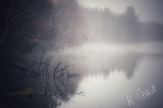 Lakeside on a foggy morning by