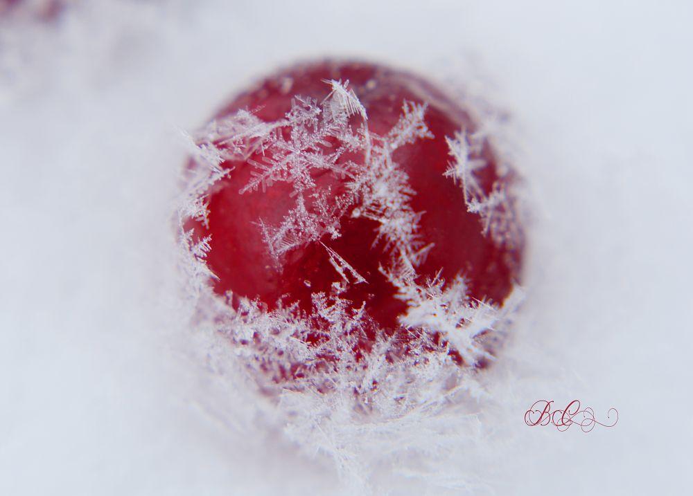 """""""Cranberry Snowflake"""", by Bonnie Coughlan. Taken at Miramichi, NB."""