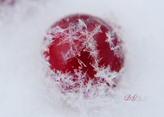 Cranberry Snowflake by