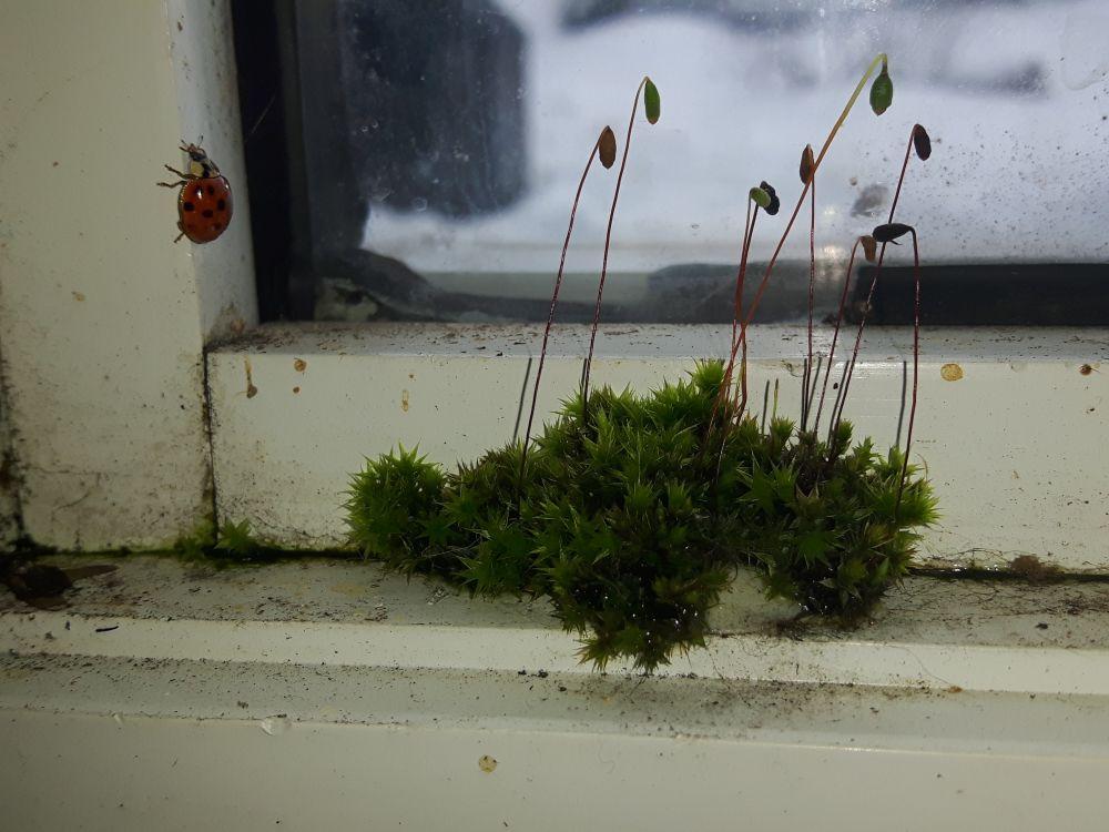 """""""Lady bug & moss"""", by Stephanie Dixon. Taken at Christie Ridge, New Brunswick."""