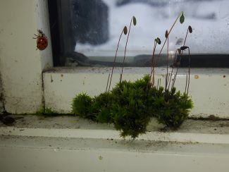 Lady bug & moss by