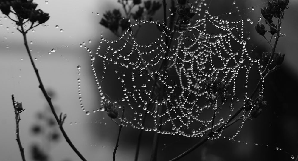 """Silver Web"", by Margaret Keizer. Taken at Eastern Passage."