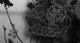 Silver Web by