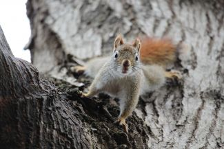 A Squirrel Moment by