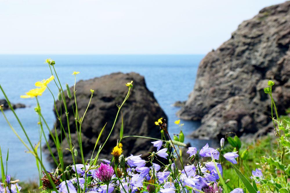 """Wild Flowers"", by Garry R Richards. Taken at Bottle Cove (York Harbour), NL."