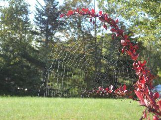 Spiderweb by