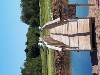 Gulls on a Bridge by