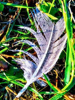 Silver Dew Drops by