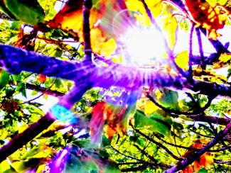 Tree with Kaleidoscope Leaves by