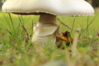 Under The Toadstool by