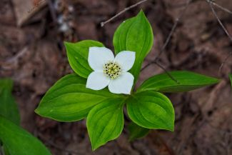 White Flower by