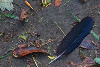 Crow Feather by