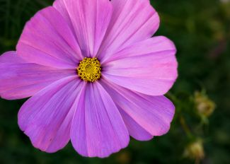 Flower At Green Gables Heritage Place by