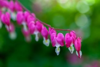 Story of a bleeding heart by