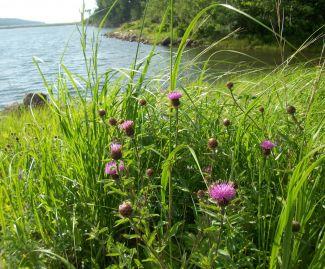 A wee bit Scottish in Nova Scotia by