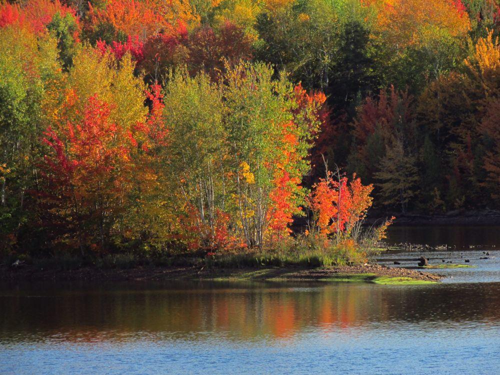 """""""Turtle Creek"""", by Tony Austen. Taken at Turtle Creek, NB."""