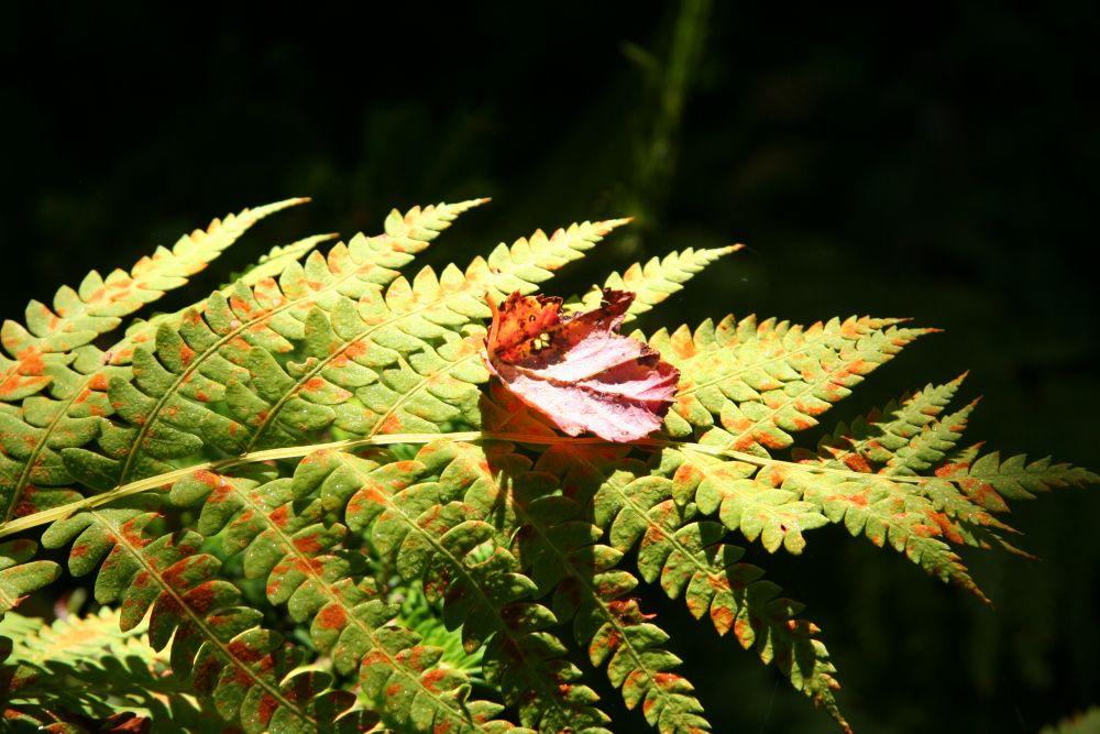 """Fern and Leaf"", by Graham Lavers. Taken at Hatchett Lake NS."