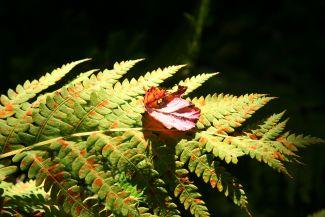 Fern and Leaf by
