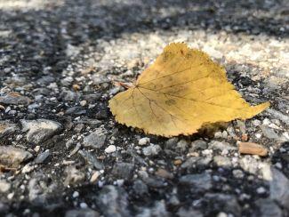 Fallen leaf by