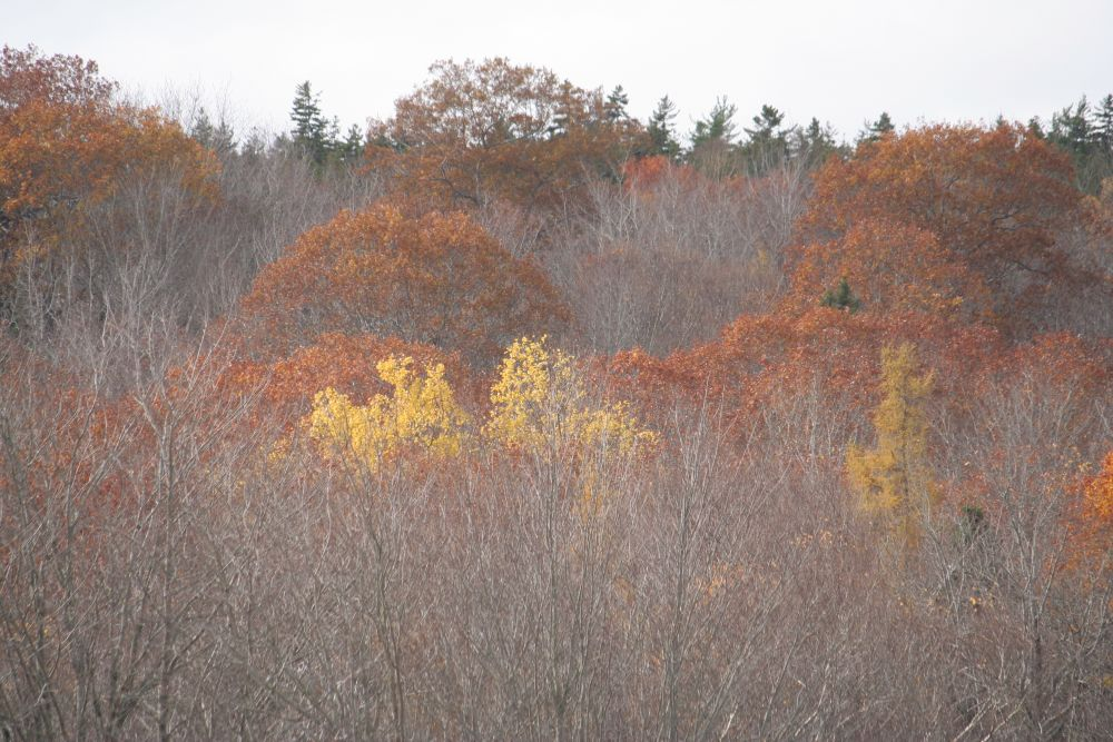 """""""Misty Autumn"""", by Graham Lavers. Taken at Bedford NS."""