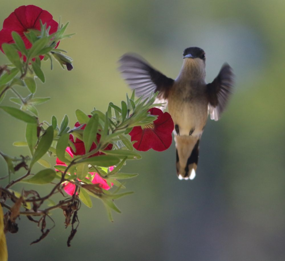 """Humming Around"", by Susan."