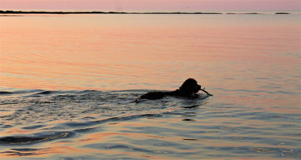 """""""Swimming at sunset"""", by Anna Gerrior-Sangster. Taken at Caribou River."""