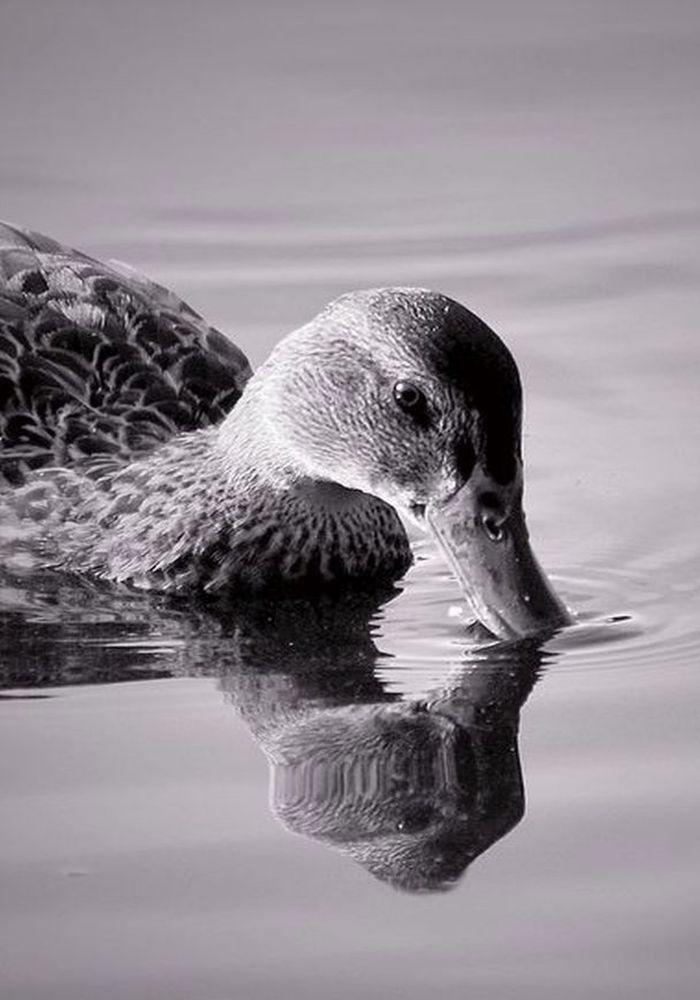 """Reflections"", by Darlene Rafuse. Taken at Miners Marsh, Kentville, NS."